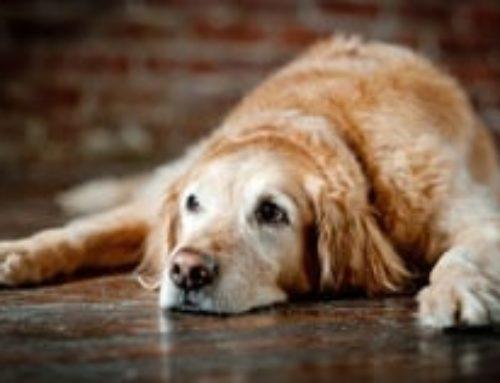 5 buone ragioni per adottare un cane anziano