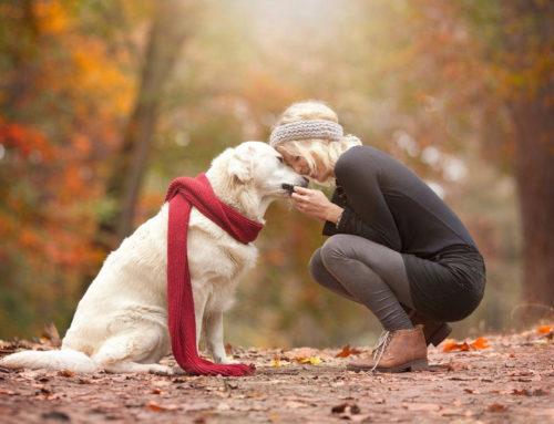 Le 5.267 cose da sapere quando si lavora coi cani