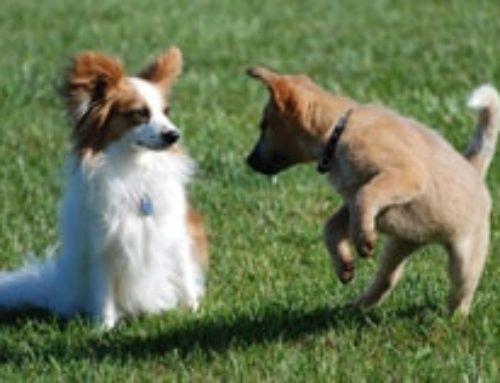 La socializzazione dei cuccioli: perché, quando e come farla correttamente