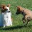Classi socializzazione cuccioli