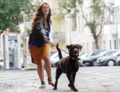Insegnare al proprio cane a non tirare al guinzaglio